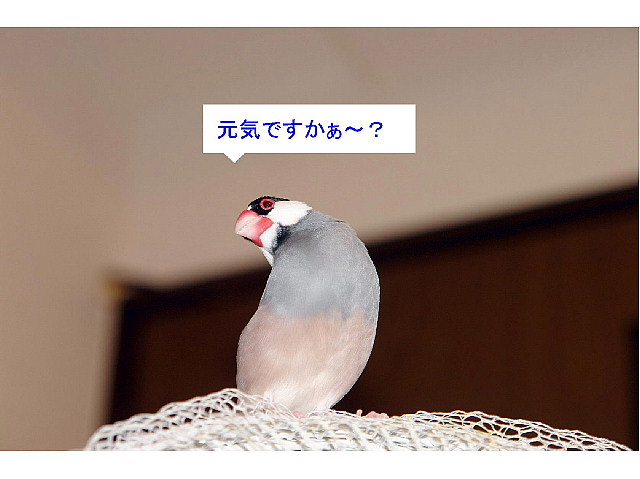 a0019545_1984277.jpg