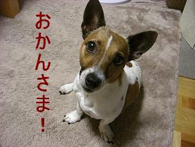 花姫と一緒に区役所へ_d0134867_11532446.jpg