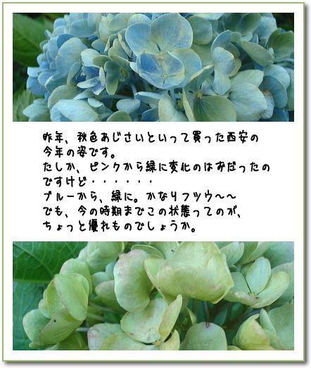 b0066947_1332821.jpg