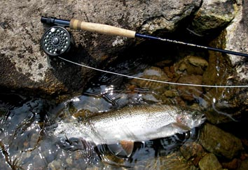 Deer Creek Switch Rods_c0127476_11335716.jpg