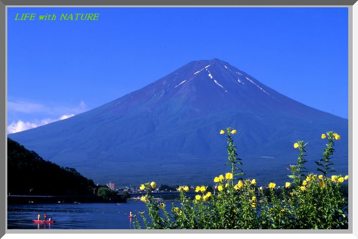富士と月見草_b0093088_81455.jpg