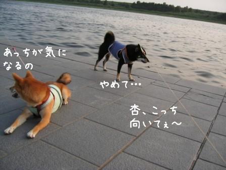 夕日と杏_f0068501_2202098.jpg
