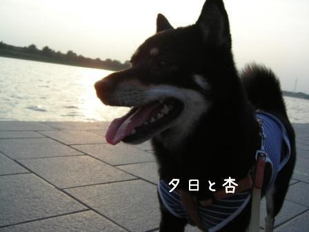 夕日と杏_f0068501_226813.jpg