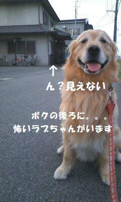 b0127531_1052660.jpg