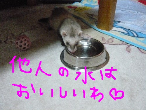 c0165472_16441176.jpg