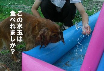 屋外ドッグランにプールを設置!!_f0170713_12574826.jpg