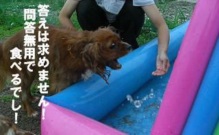 屋外ドッグランにプールを設置!!_f0170713_12575813.jpg