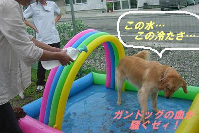屋外ドッグランにプールを設置!!_f0170713_1345415.jpg