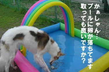 屋外ドッグランにプールを設置!!_f0170713_1393321.jpg