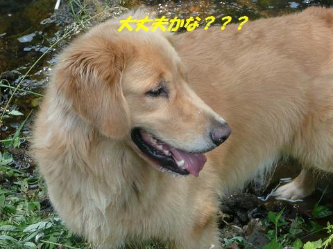 f0114128_14464427.jpg