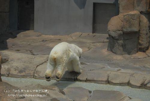 ホッキョクグマの氷プレゼント 王子 その2_b0024758_052436.jpg