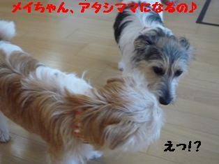 b0137280_15583984.jpg