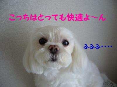 f0145192_1527370.jpg