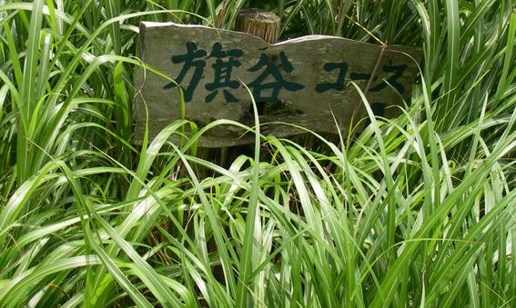 08.08.05(火) カメラ目線_a0062810_18335469.jpg