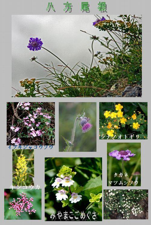 白馬村へ 栂池自然園・八方尾根_c0073016_2162659.jpg