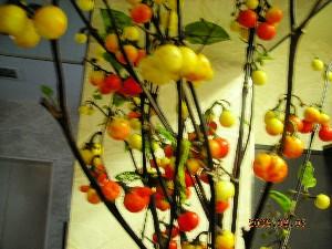 花茄子_b0151724_10494499.jpg
