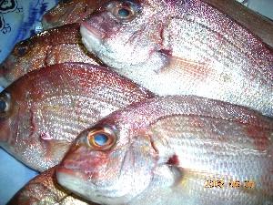 伊良湖産です。鯛 さざえ_b0151724_1054131.jpg