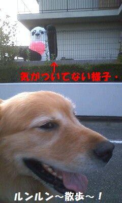 b0127531_17364534.jpg