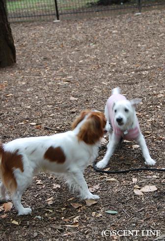 犬が、「ブルブルッ」とする意味_c0099133_2231186.jpg