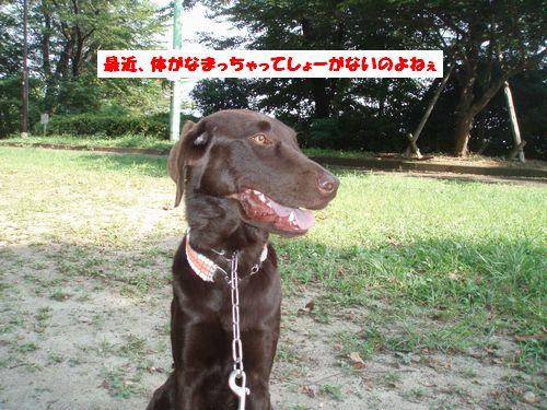 b0148945_1757497.jpg