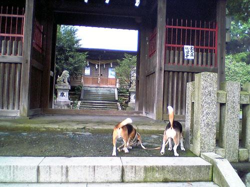 草薙神社の迷いうさぎ_b0005652_19581127.jpg