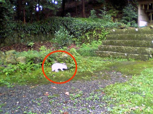草薙神社の迷いうさぎ_b0005652_1959144.jpg