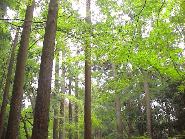 京都に行ってきました~お寺編。_e0060555_13225518.jpg