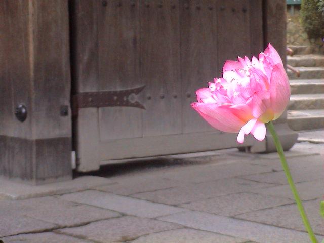 京都に行ってきました~お寺編。_e0060555_13243245.jpg