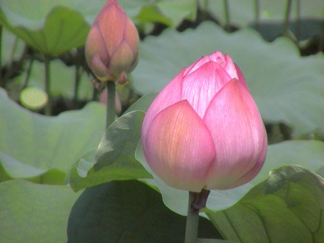 京都に行ってきました~お寺編。_e0060555_1362627.jpg