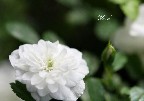 f0168375_1944549.jpg
