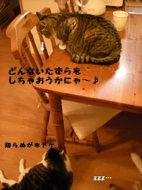 f0081100_1734894.jpg