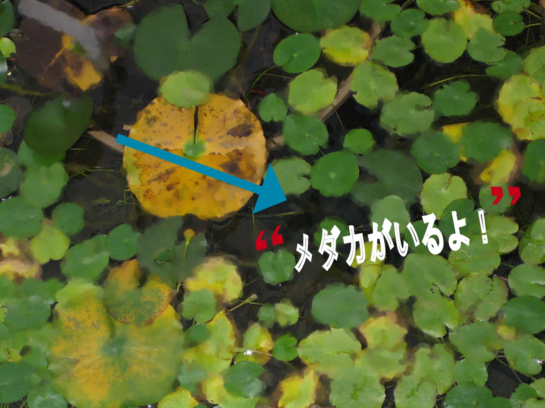 f0149420_17553744.jpg