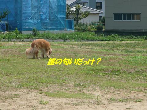 f0114128_85259.jpg