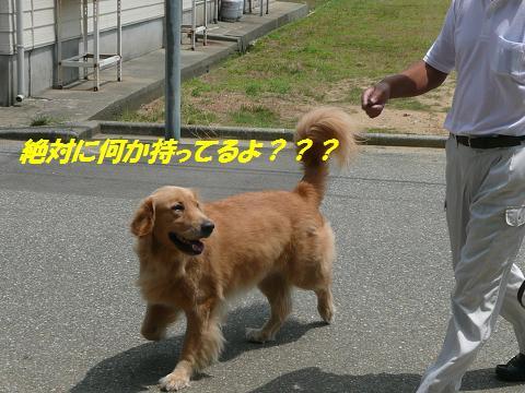 f0114128_856170.jpg