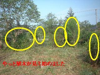 f0031037_2040519.jpg