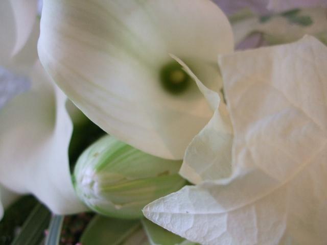 オークリーフ(白いカラーと百合・ノーブルの花束)_f0049672_15541316.jpg