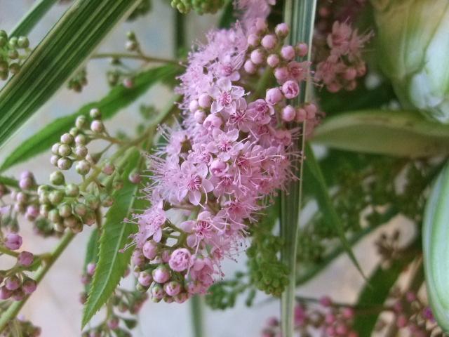 オークリーフ(白いカラーと百合・ノーブルの花束)_f0049672_15564796.jpg