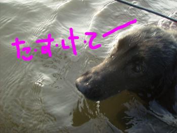 ジルヴァの初入水!_b0084194_13122998.jpg