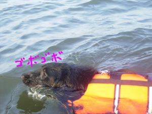ジルヴァの初入水!_b0084194_13352632.jpg