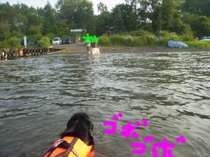 ジルヴァの初入水!_b0084194_13465188.jpg