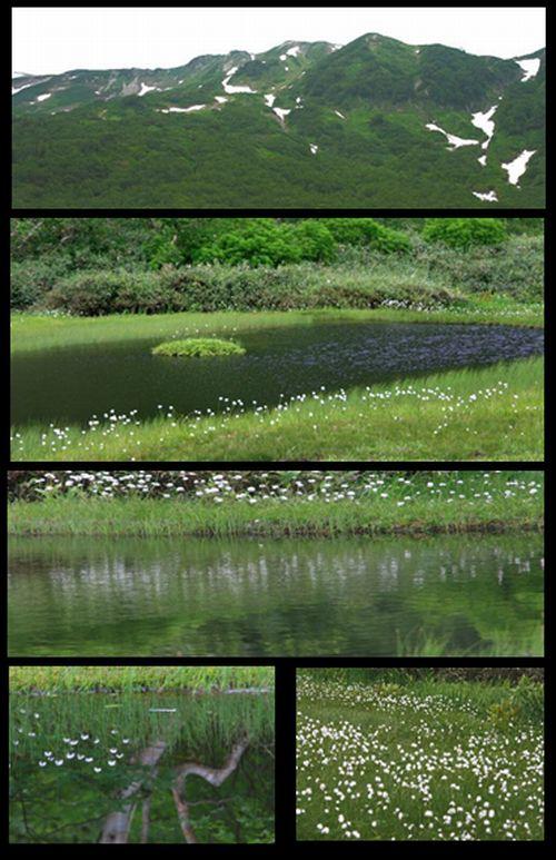 白馬村へ 栂池自然園・八方尾根_c0073016_8462313.jpg