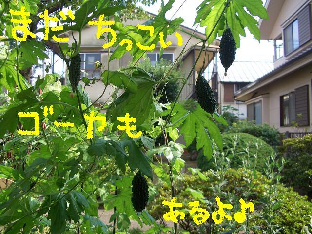 c0134720_1720227.jpg
