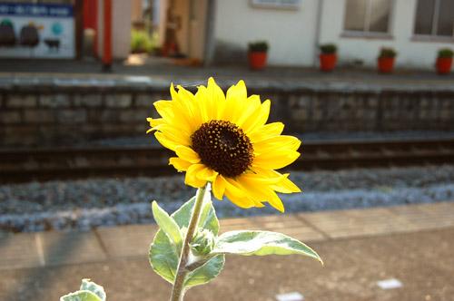真夏のできごと_f0047623_546482.jpg