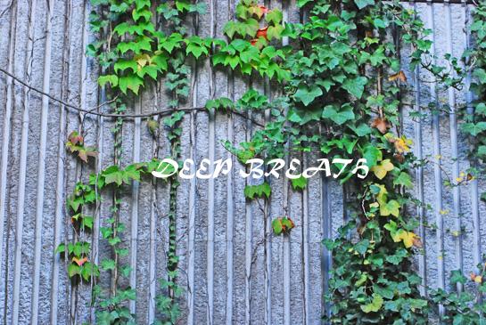 f0148725_23232351.jpg