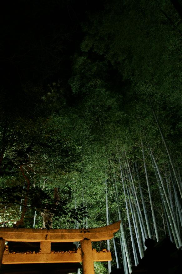 京都 写真。_b0155395_1182145.jpg