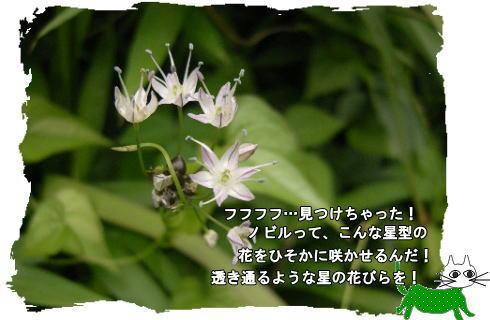 f0137096_12204935.jpg