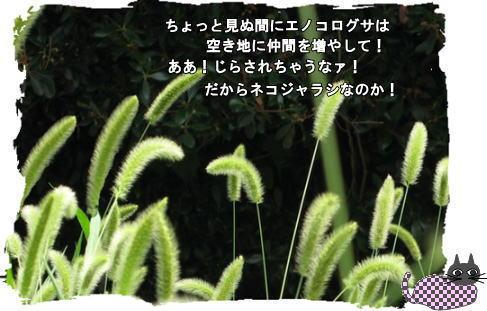 f0137096_12223089.jpg