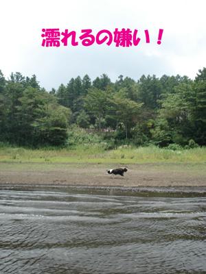 f0132070_13502050.jpg
