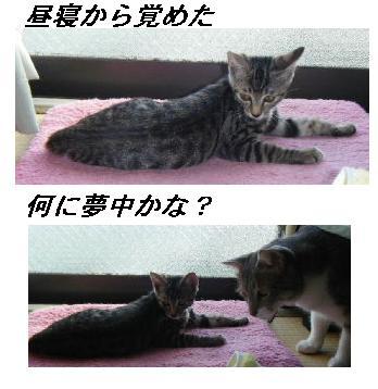 b0112380_19341214.jpg