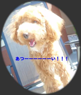 c0164491_754525.jpg
